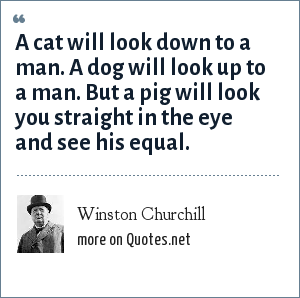 Winston Churchill: A cat will look down to a man. A dog will look up to a man. But a pig will look you straight in the eye and see his equal.