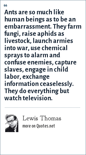 Lewis Thomas: Ants are so much like human beings as to be an embarrassment. They farm fungi, raise aphids as livestock, launch armies into war, use chemical sprays to alarm and confuse enemies, capture slaves, engage in child labor, exchange information ceaselessly. They do everything but watch television.