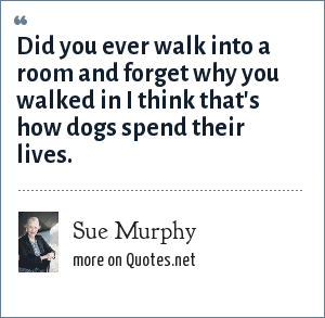 Sue Murphy: Did you ever walk into a room and forget why you walked in I think that's how dogs spend their lives.
