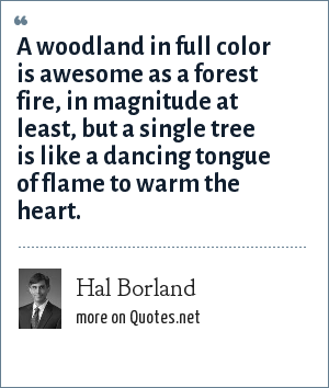 Hal Borland: A woodland in full color is awesome as a forest fire, in magnitude at least, but a single tree is like a dancing tongue of flame to warm the heart.