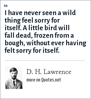 D. H. Lawrence: I have never seen a wild thing feel sorry for itself. A little bird will fall dead, frozen from a bough, without ever having felt sorry for itself.