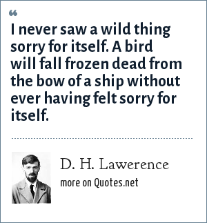 D. H. Lawerence: I never saw a wild thing sorry for itself. A bird will fall frozen dead from the bow of a ship without ever having felt sorry for itself.