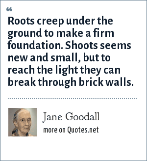 Jane Goodall: Roots creep under the ground to make a firm foundation. Shoots seems new and small, but to reach the light they can break through brick walls.