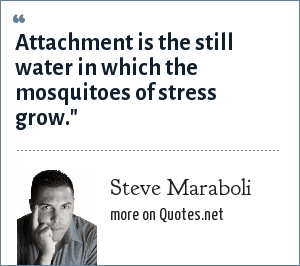 Steve Maraboli: Attachment is the still water in which the mosquitoes of stress grow.