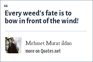 Mehmet Murat ildan: Every weed's fate is to bow in front of the wind!