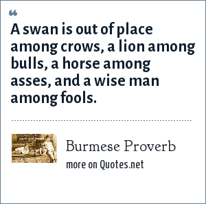 Burmese Proverb: A swan is out of place among crows, a lion among bulls, a horse among asses, and a wise man among fools.