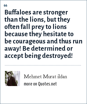 Mehmet Murat ildan: Buffaloes are stronger than the lions, but they often fall prey to lions because they hesitate to be courageous and thus run away! Be determined or accept being destroyed!
