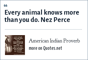 American Indian Proverb: Every animal knows more than you do. Nez Perce