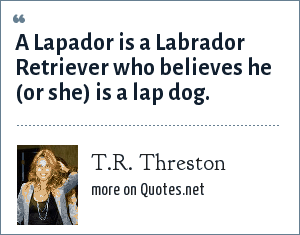 T.R. Threston: A Lapador is a Labrador Retriever who believes he (or she) is a lap dog.