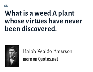 Ralph Waldo Emerson: What is a weed A plant whose virtues have never been discovered.